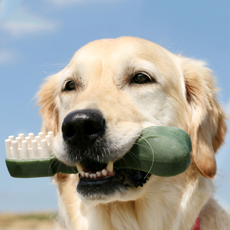 Dental Care - Green Lake Animal Hospital