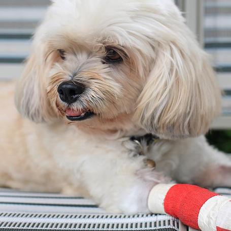 Pet Surgery - Green Lake Animal Hospital