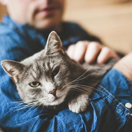 Preventative Care for Cats - Green Lake Animal Hospital
