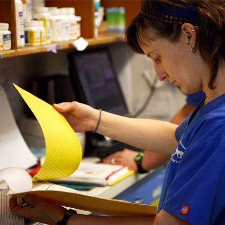 Lab Work - Green Lake Animal Hospital